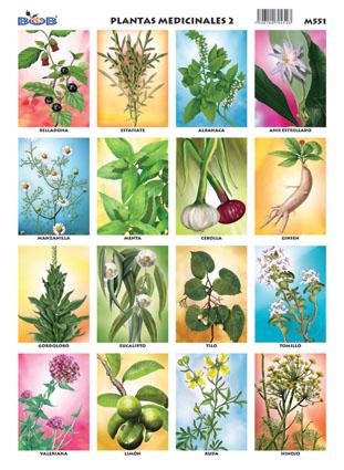 Plantas medicinales 2 for Plantas decorativas con sus nombres